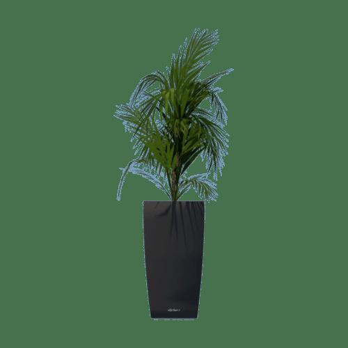 zwarte Lechuza Cubico 40 bloembak huren